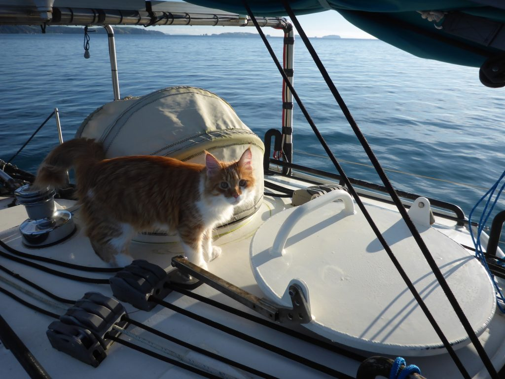 Skatty Boat Cat Above Decks