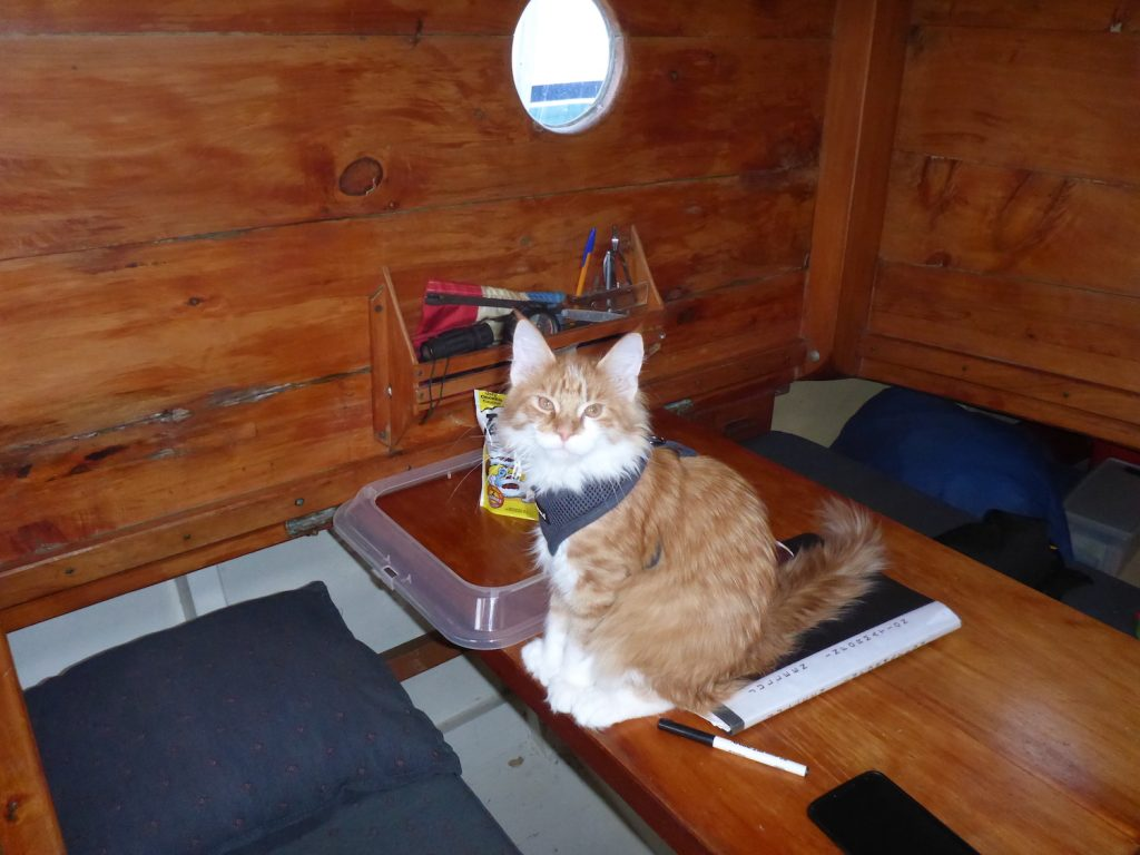Skatty Boat Cat Below Deck