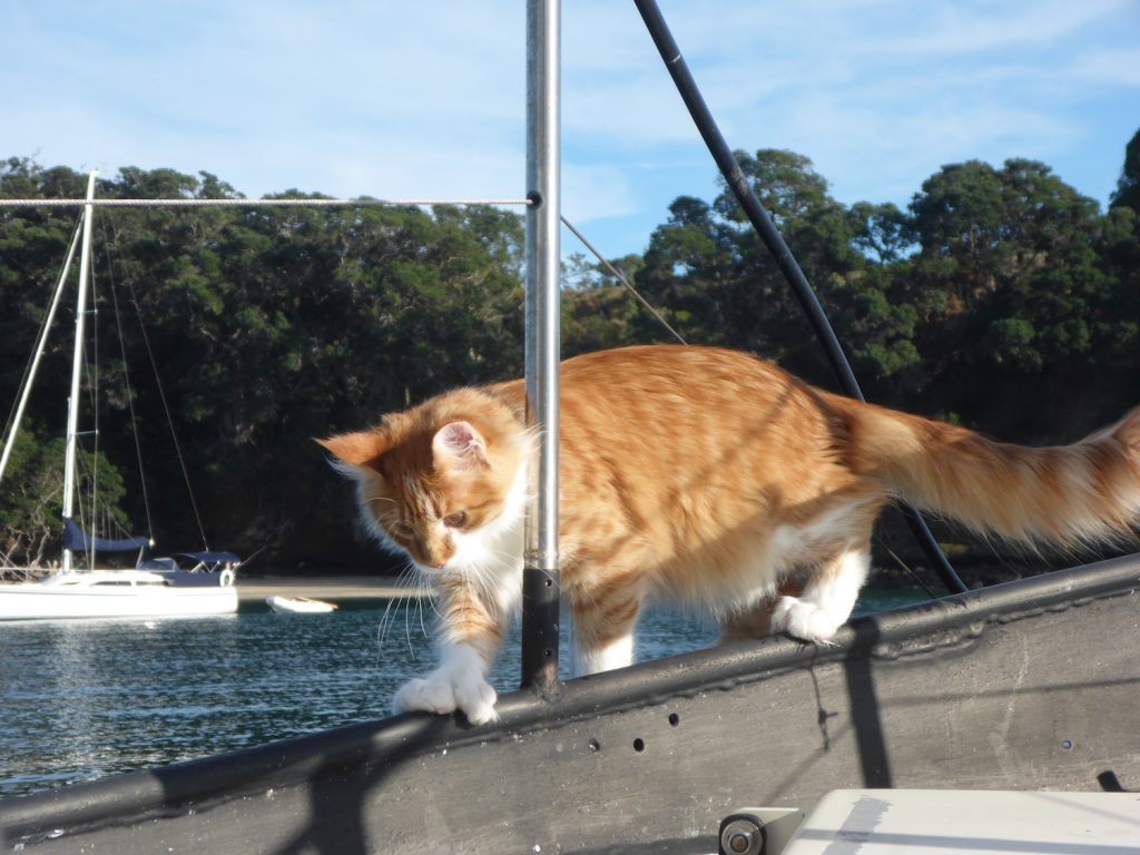 Skatty Boat Cat on Deck Near Water