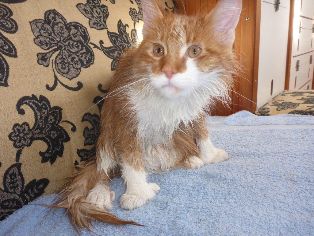 Wet Boat Cat