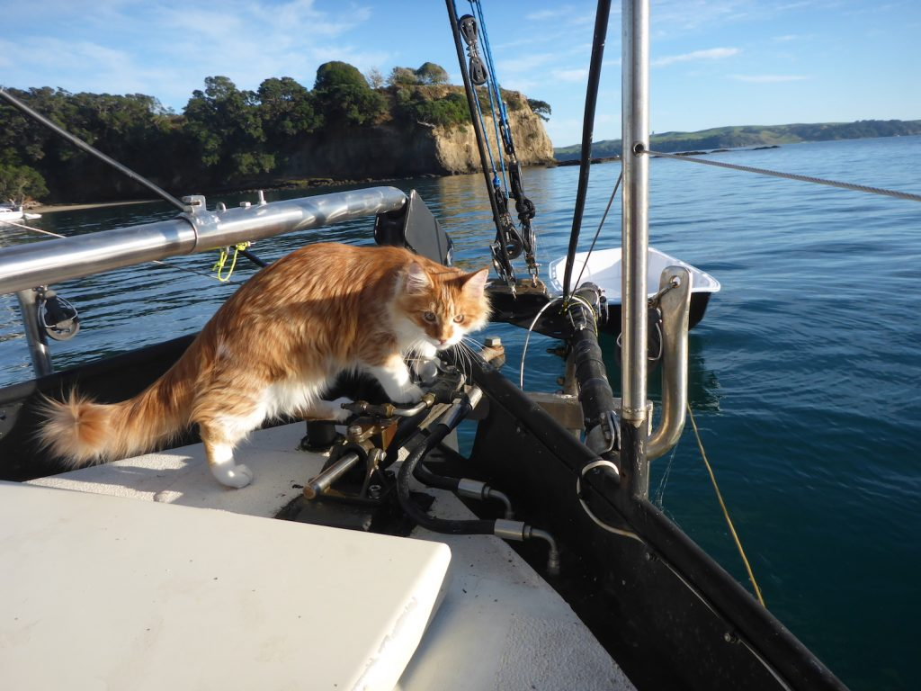 Skatty Boat Cat sits near anchor