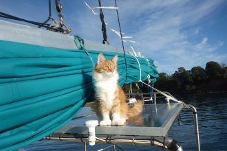 Skatty Boat Cat on Solar Panels