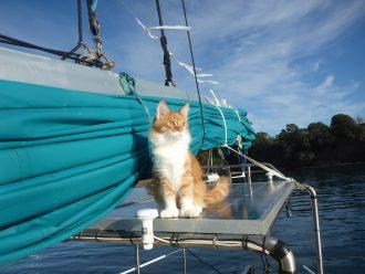 Skatty Boat Cat on Solar Panels