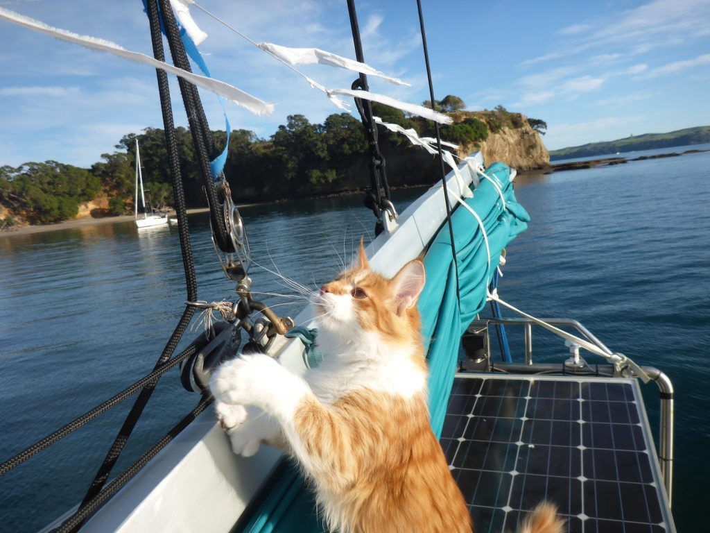 Skatty Boat Cat inspects boom