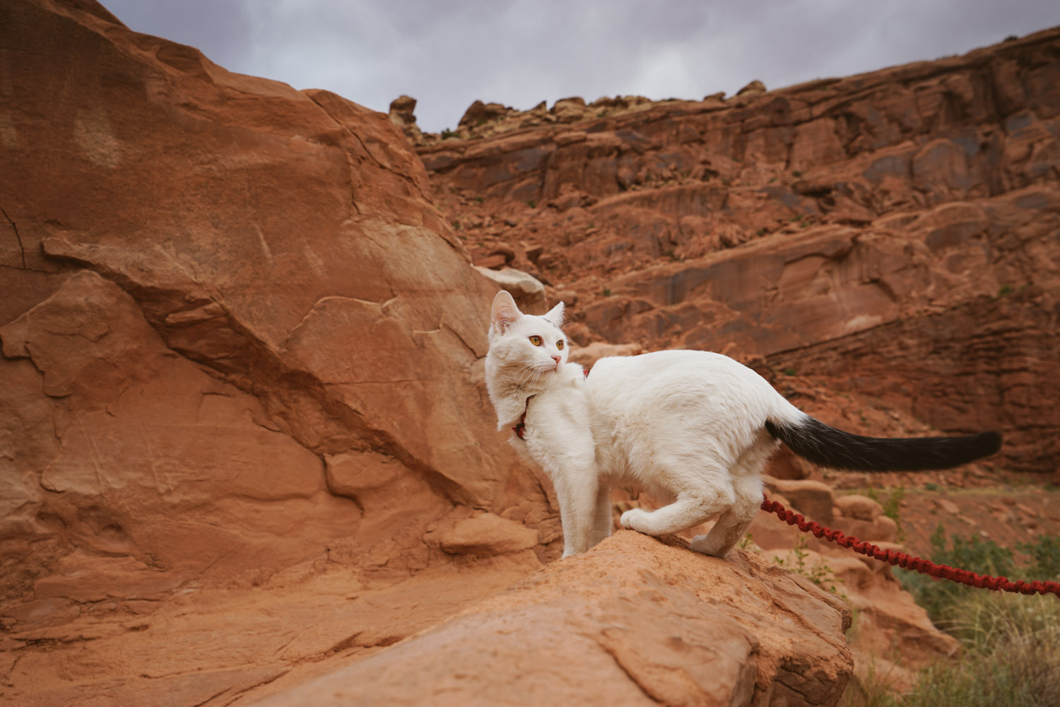 Vladimir Kitten in Moab