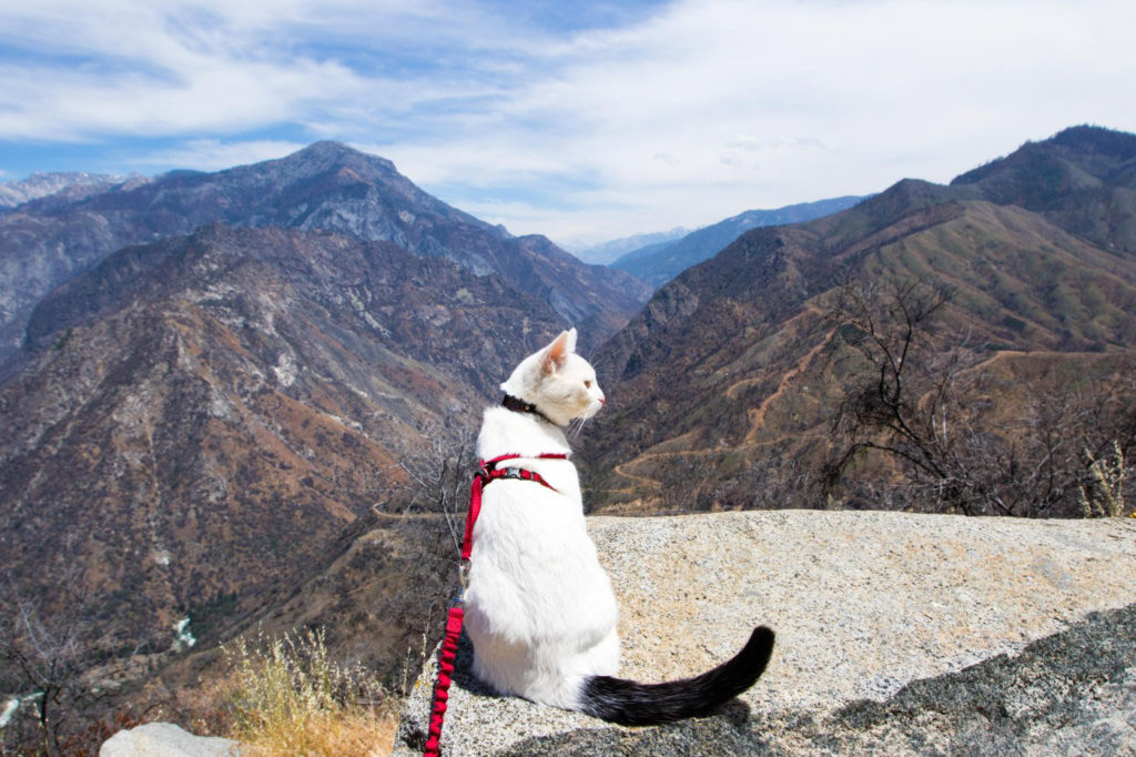 adventure cat looking over canyon