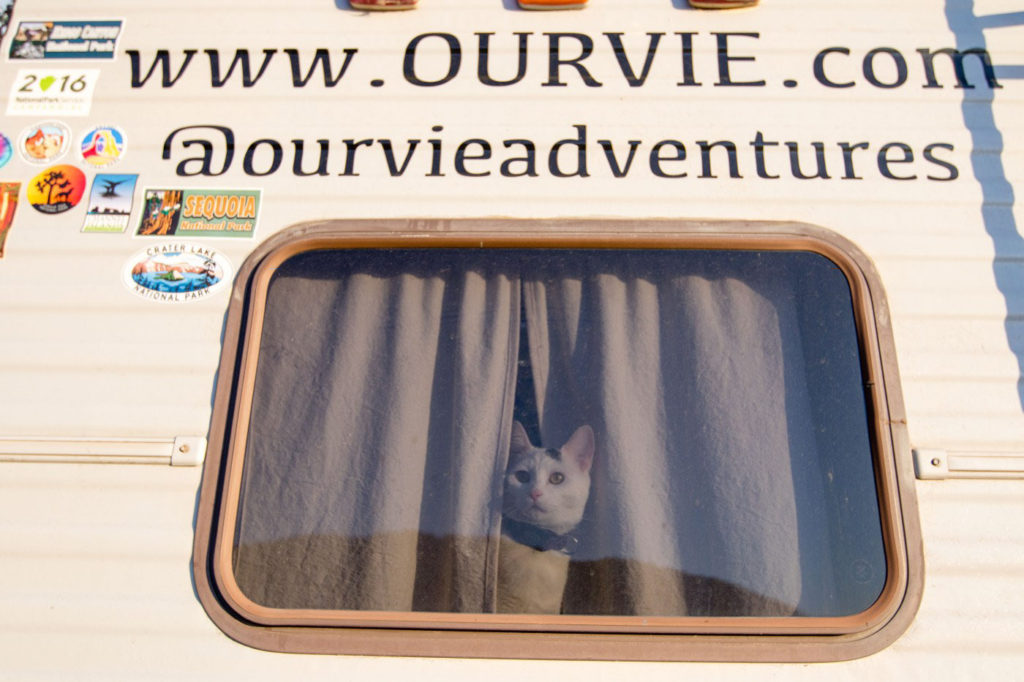 Vladimir kitten in motorhome