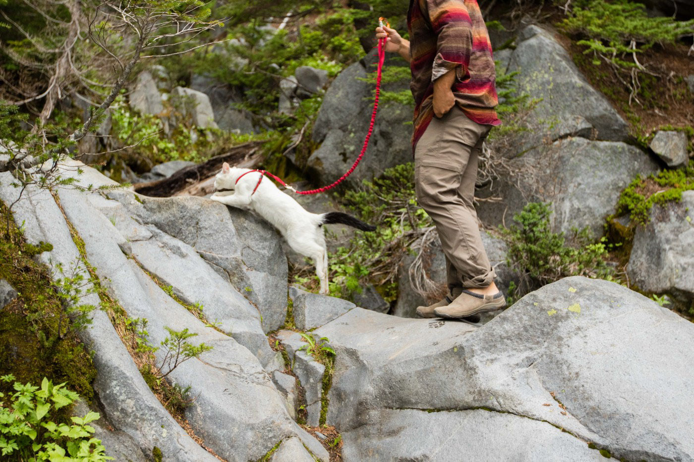 man hiking with cat