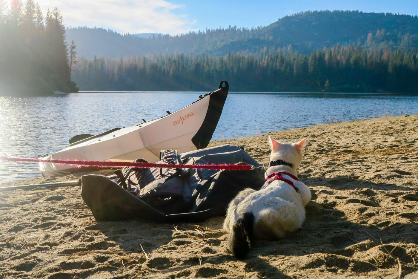 cat relaxing beside kayak