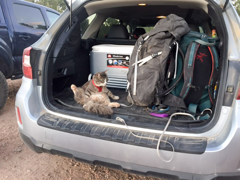 The car is packed up and Denali is ready for his next adventure!