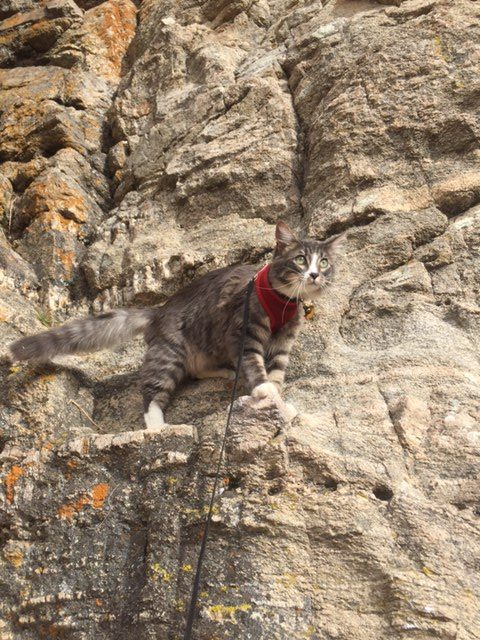 Denali gives rock climbing a try.