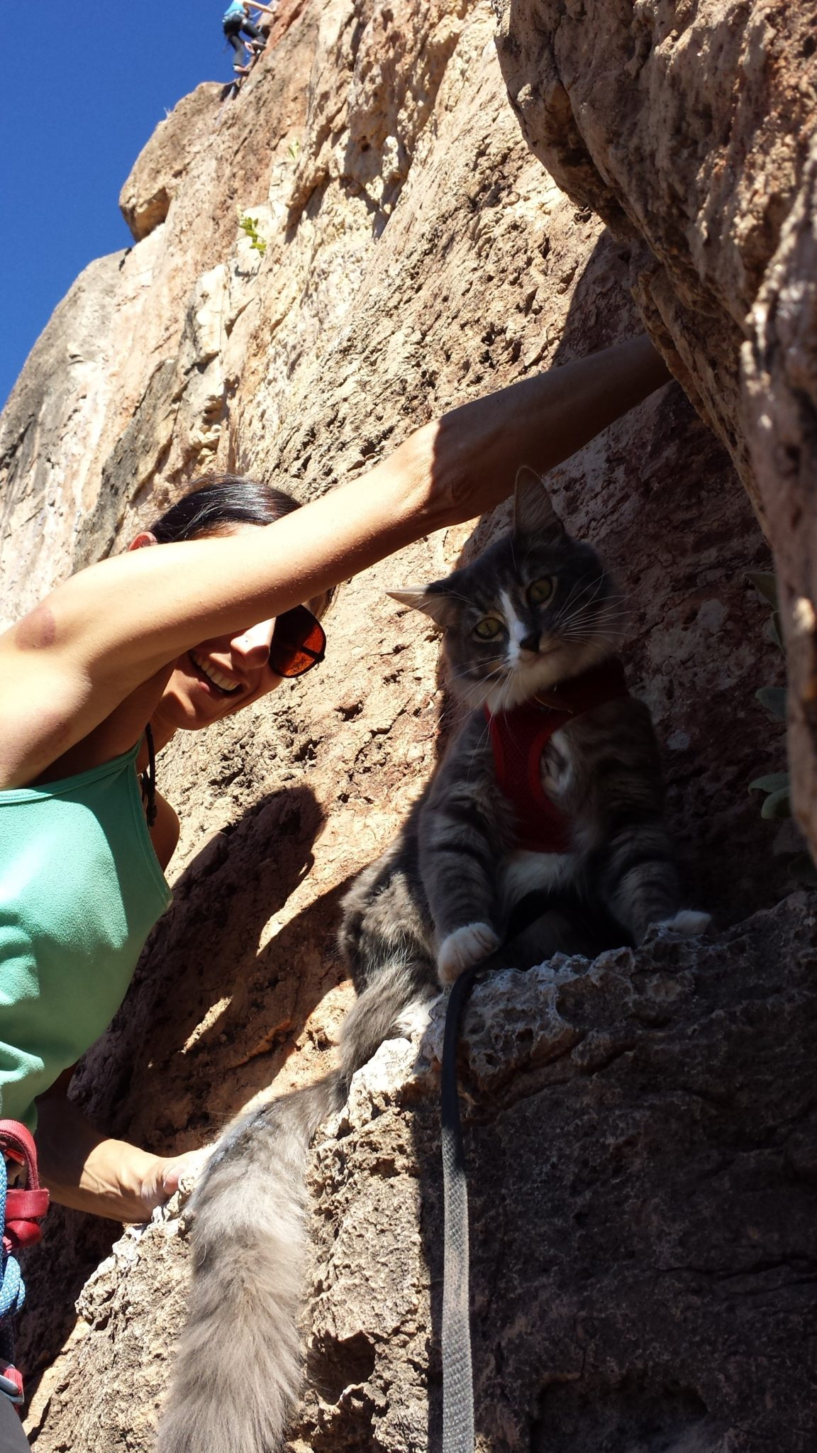 Denali takes a cool break in the shadows during one of his rock climbing expeditions.