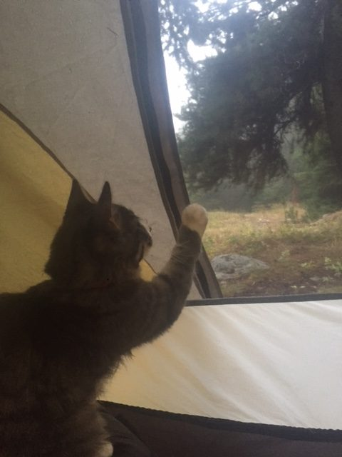 Kitten paws at tent