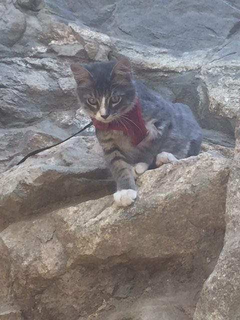 Denali puts one paw forward climbing these rocks.