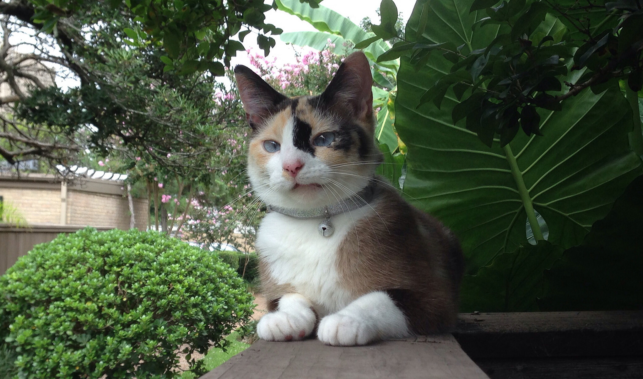 outdoor cat with bell on collar