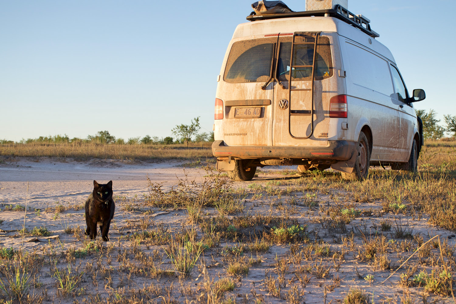 black cat and van