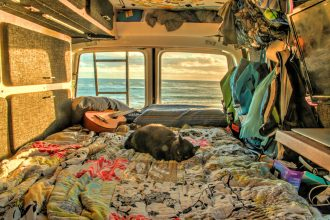 cat sleeping in van at beach