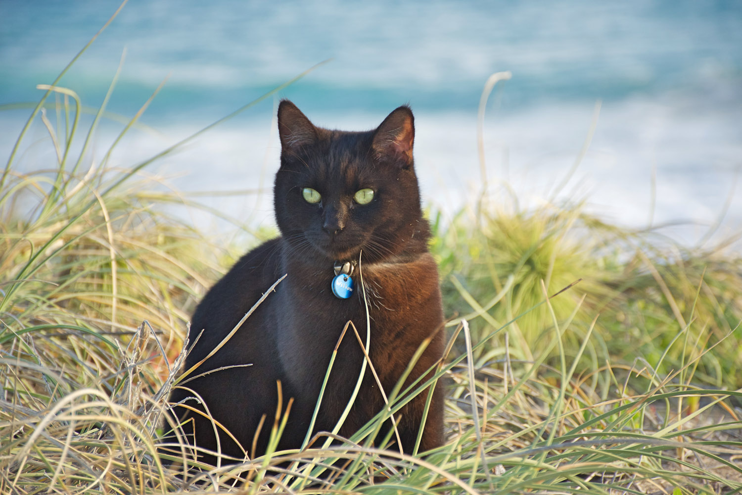 Willow van cat at beach