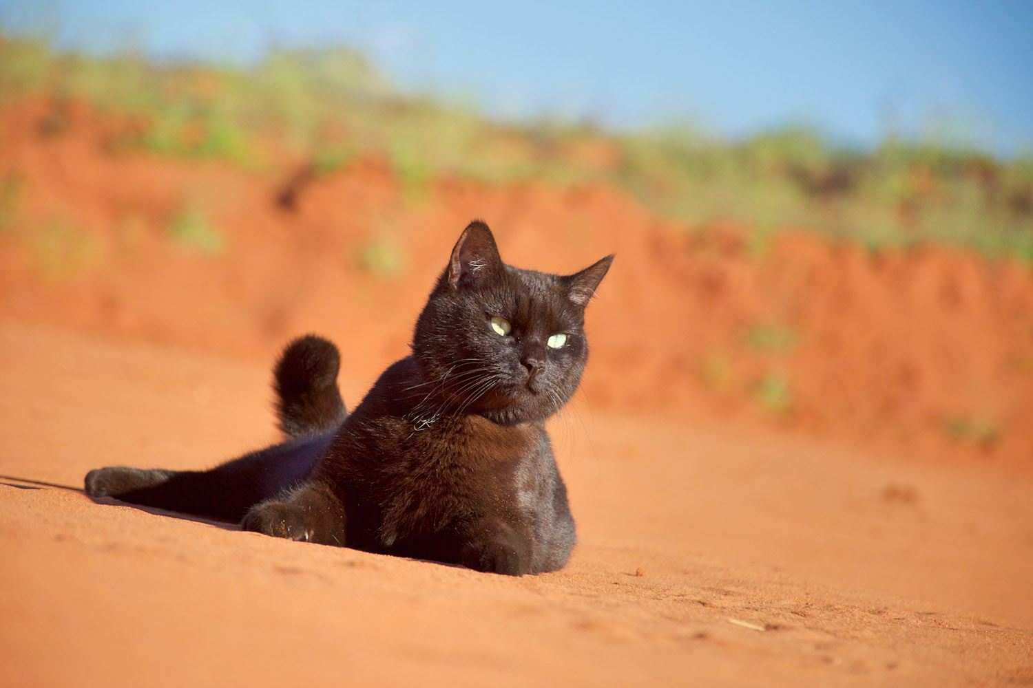 black cat rolling in dirt