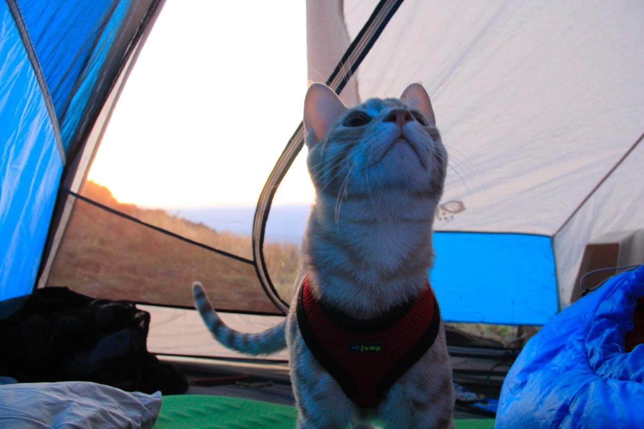 Fish the cat on camping trip