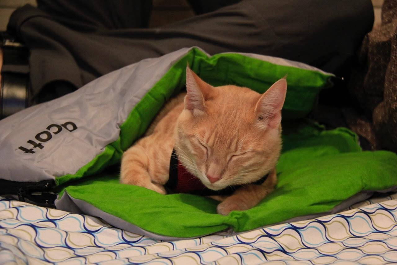 kitten in sleeping bag