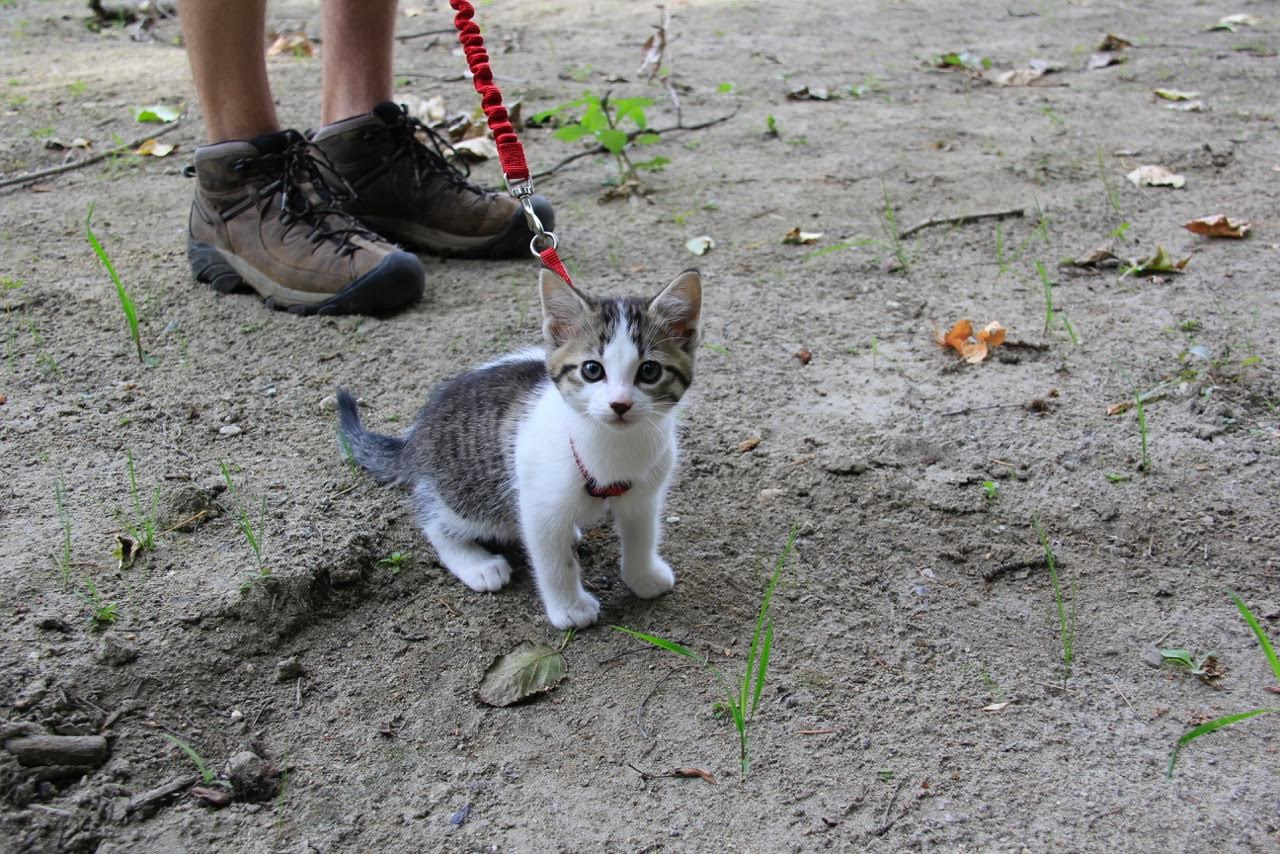 kitten out for a walk on beach
