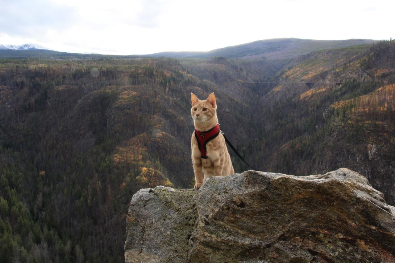 adventure cat overlooking mountain