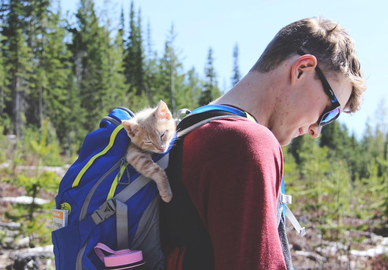 kitten Fish riding in backpack