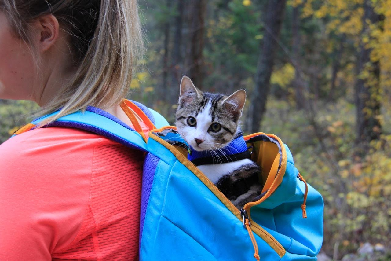 kitten riding in backpack on hike