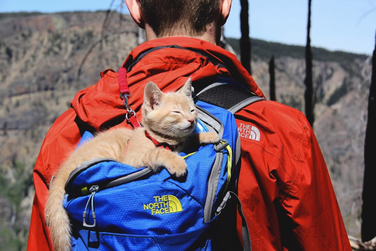 Fish the kitten napping in backpack