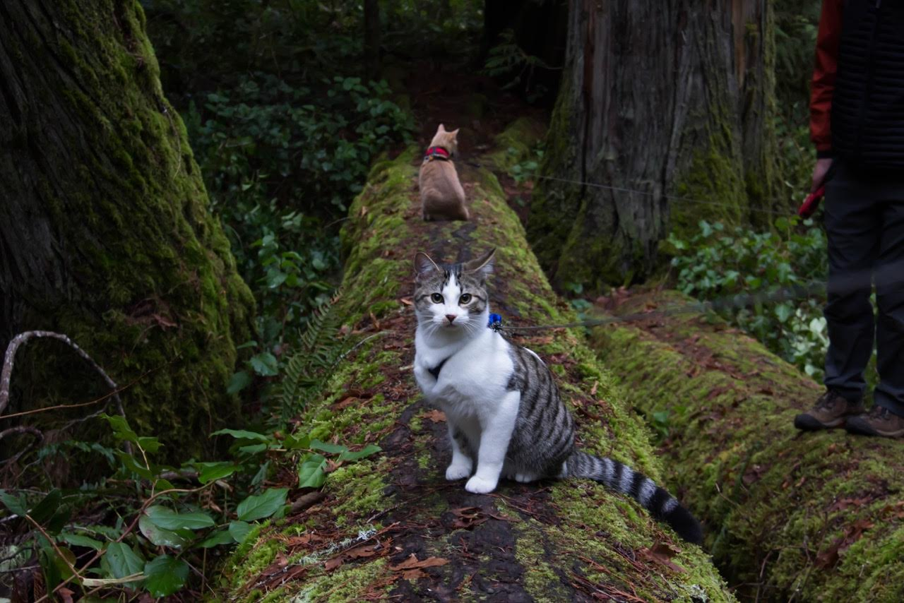 two cats on mossy tree trunk