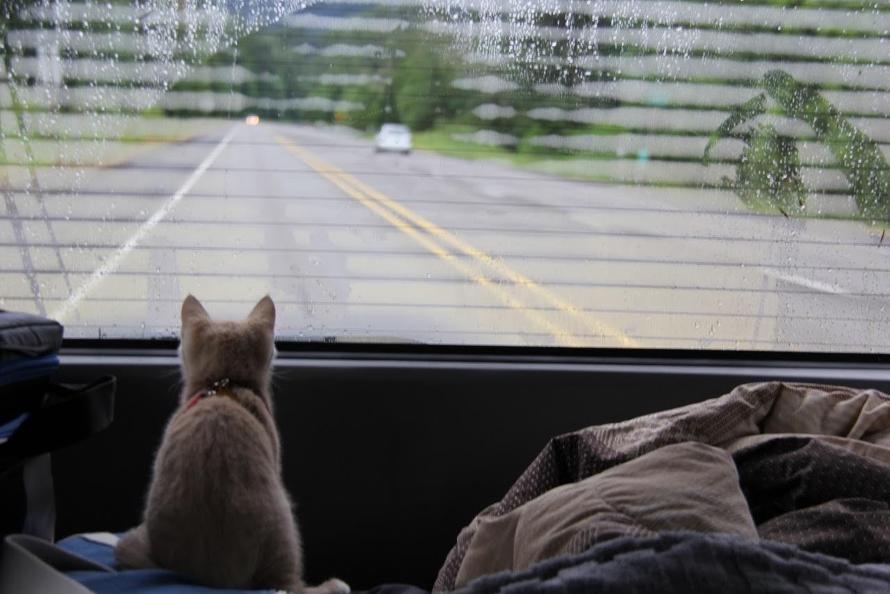 kitten on road trip