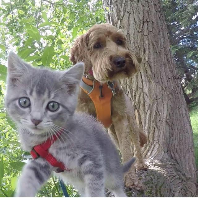 Jessie and Koda the adventure cat