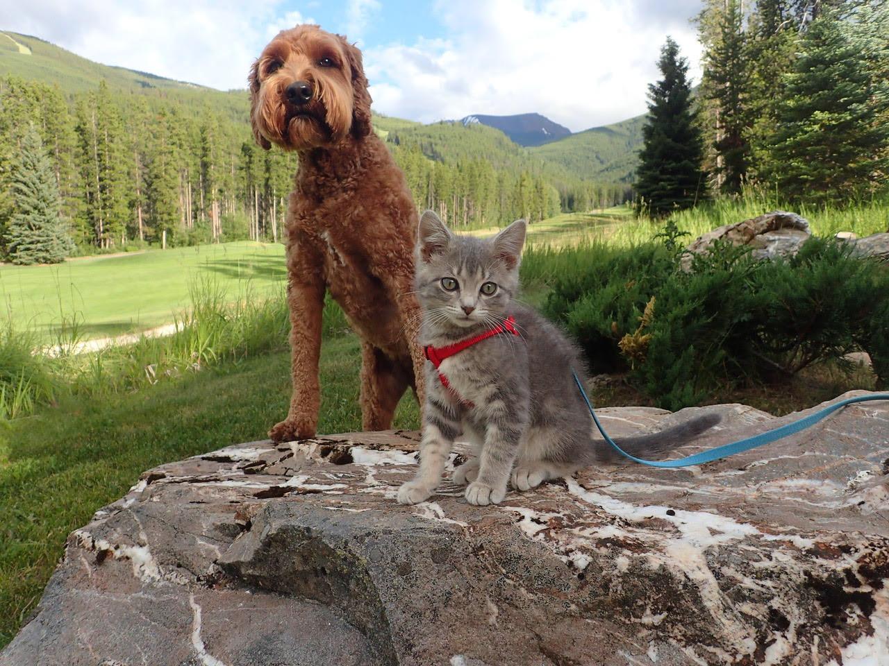 Jessie and Koda adventuring together
