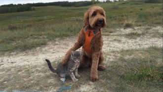 dog with arm around cat