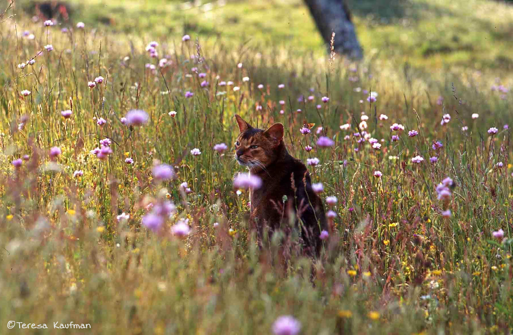 cat in field of flowers