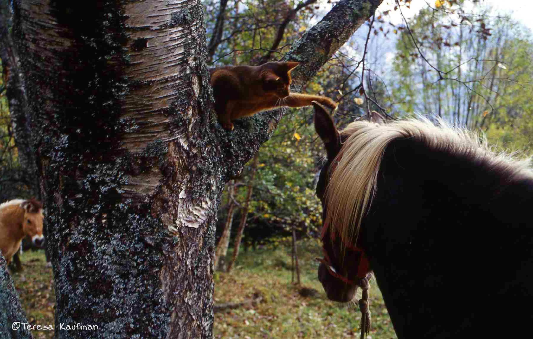 cat batting at horse's ears