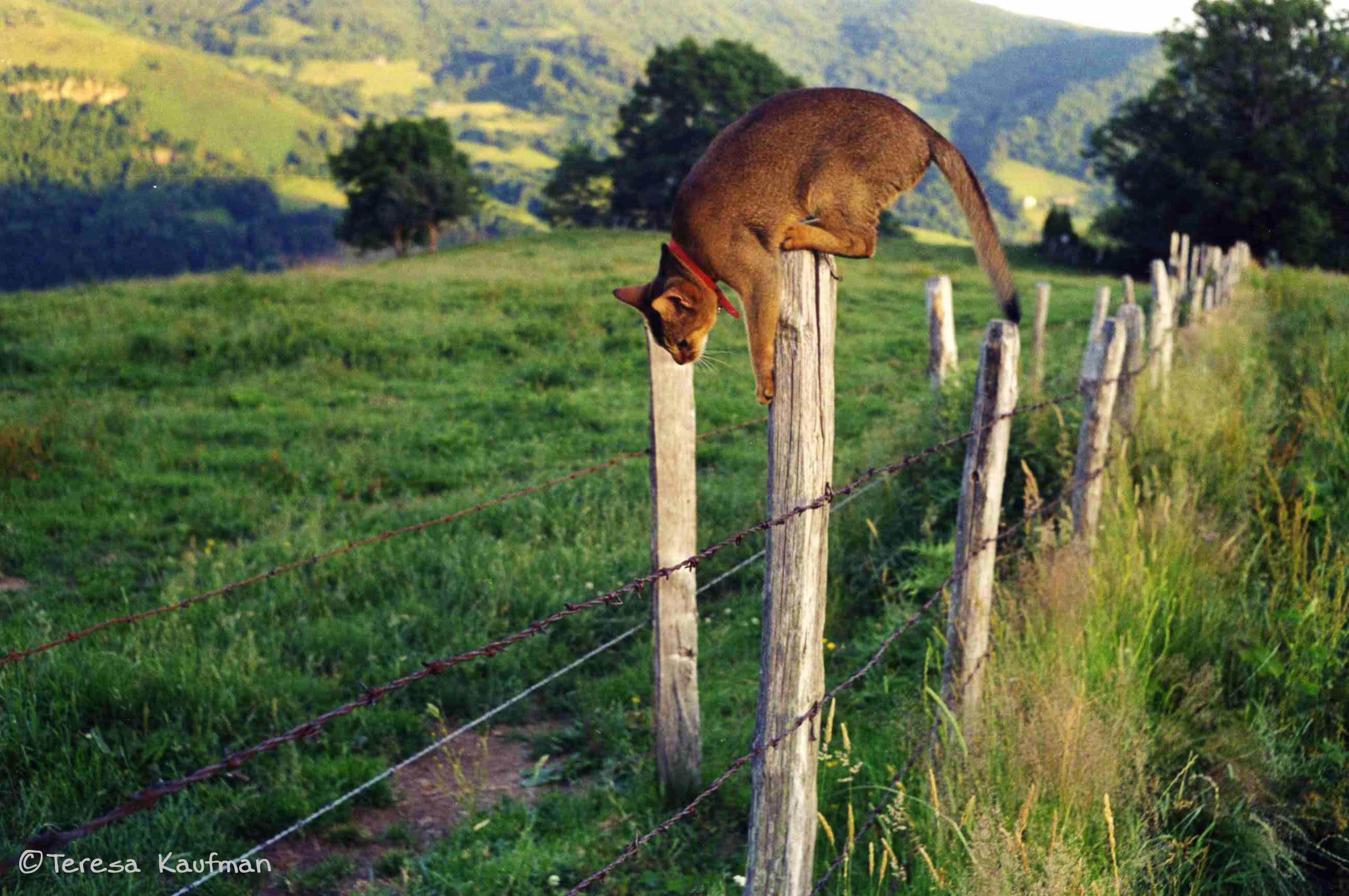 cat climbing fence in rural France