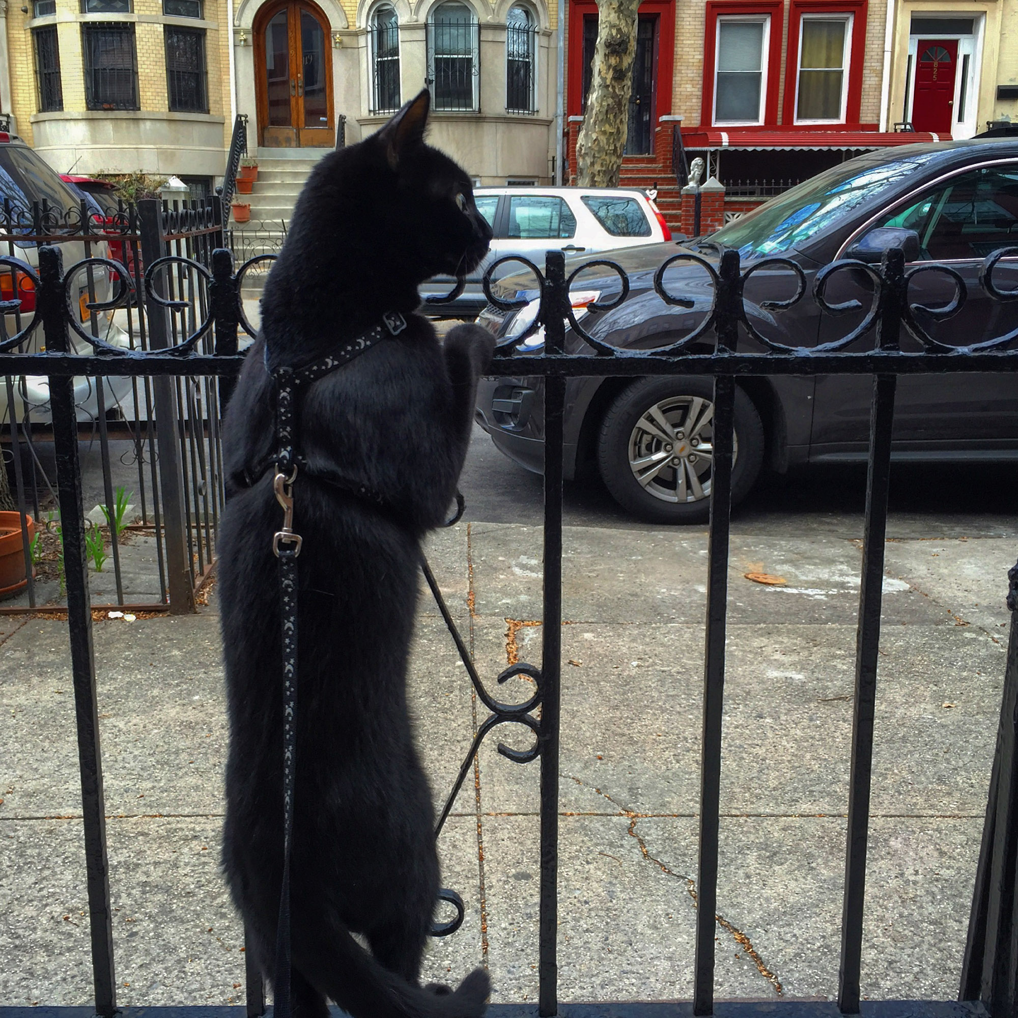 black cat in Brooklyn