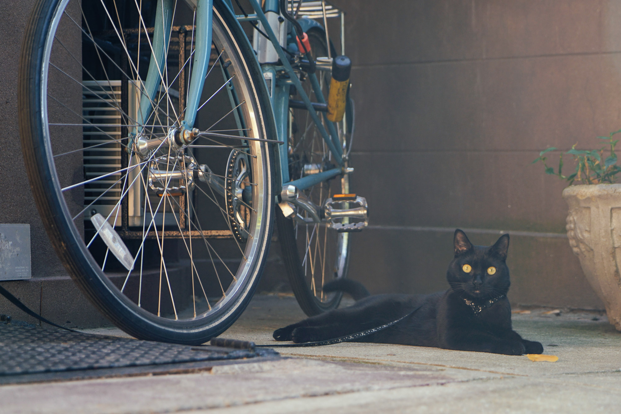 black cat beside bicycle