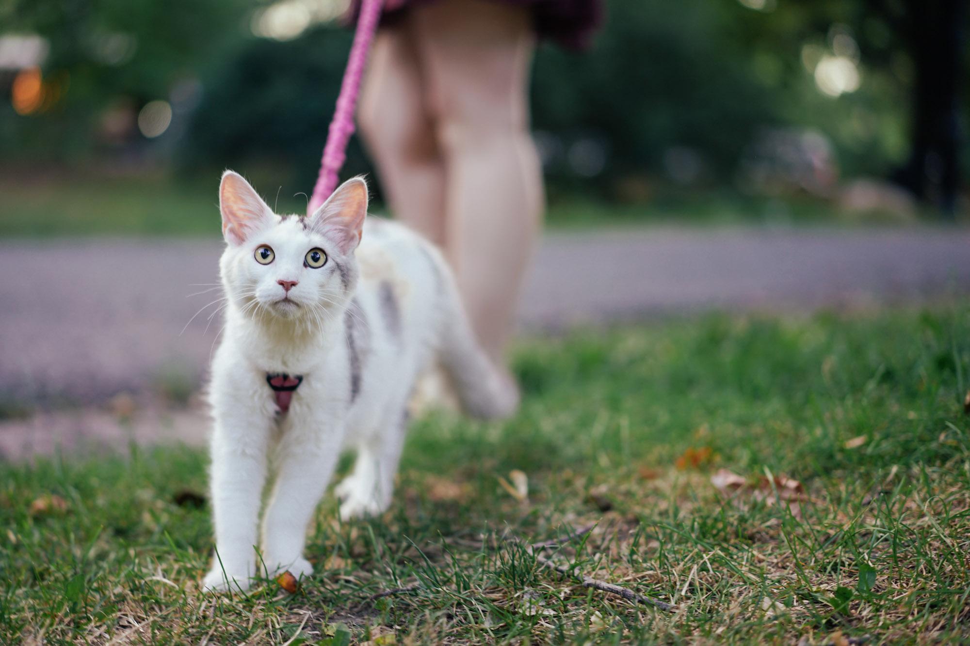 adventure cat in Prospect Park