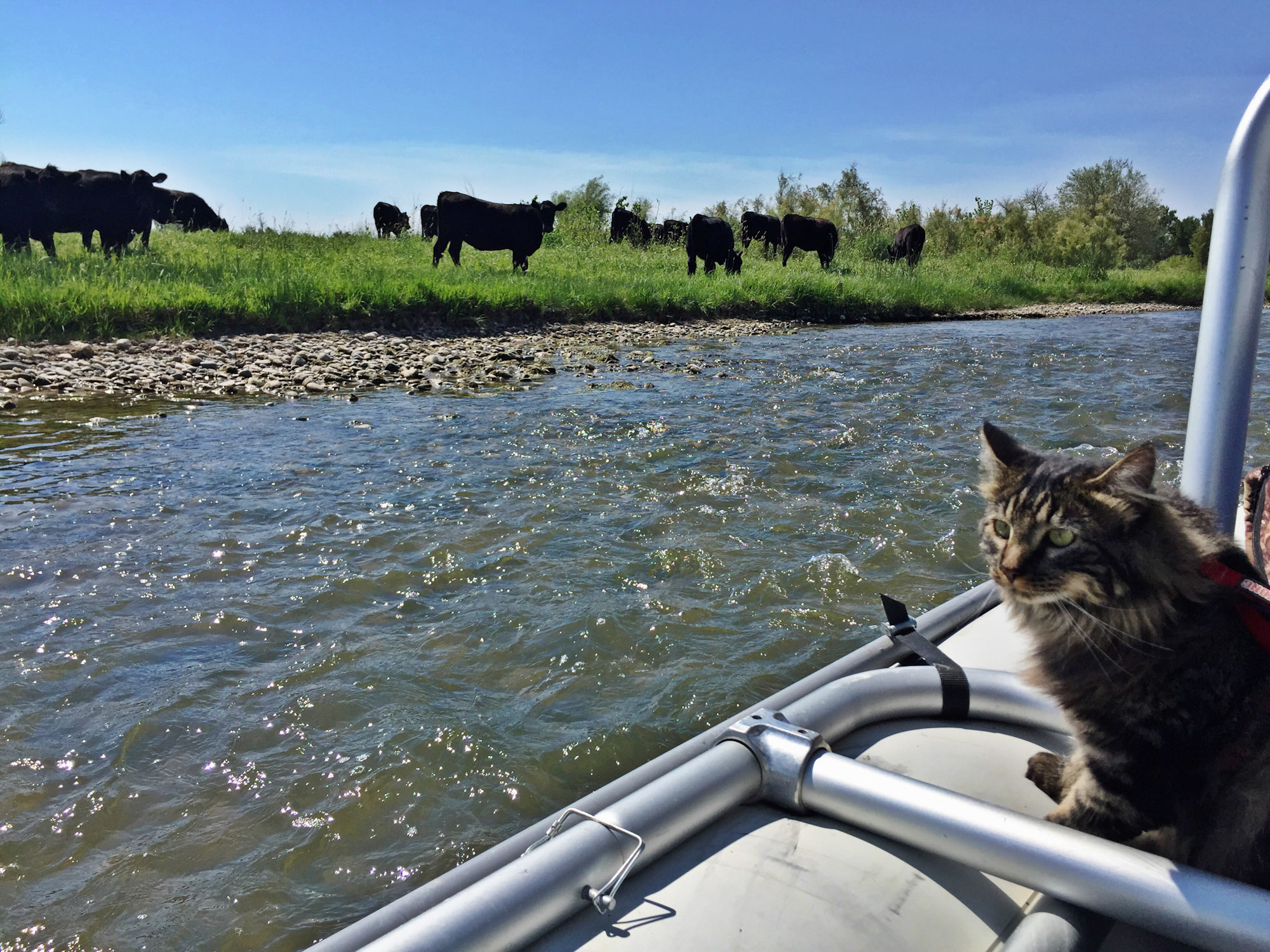 Otie the cat riding in boat