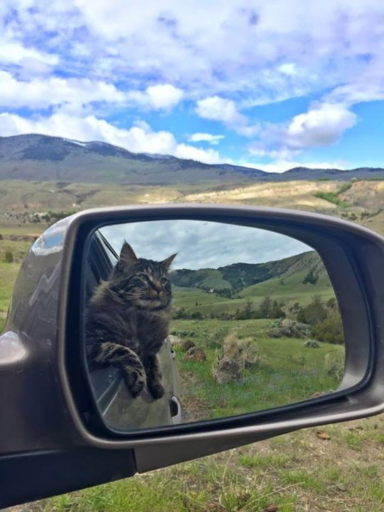 Otie the adventure cat in sideview mirror