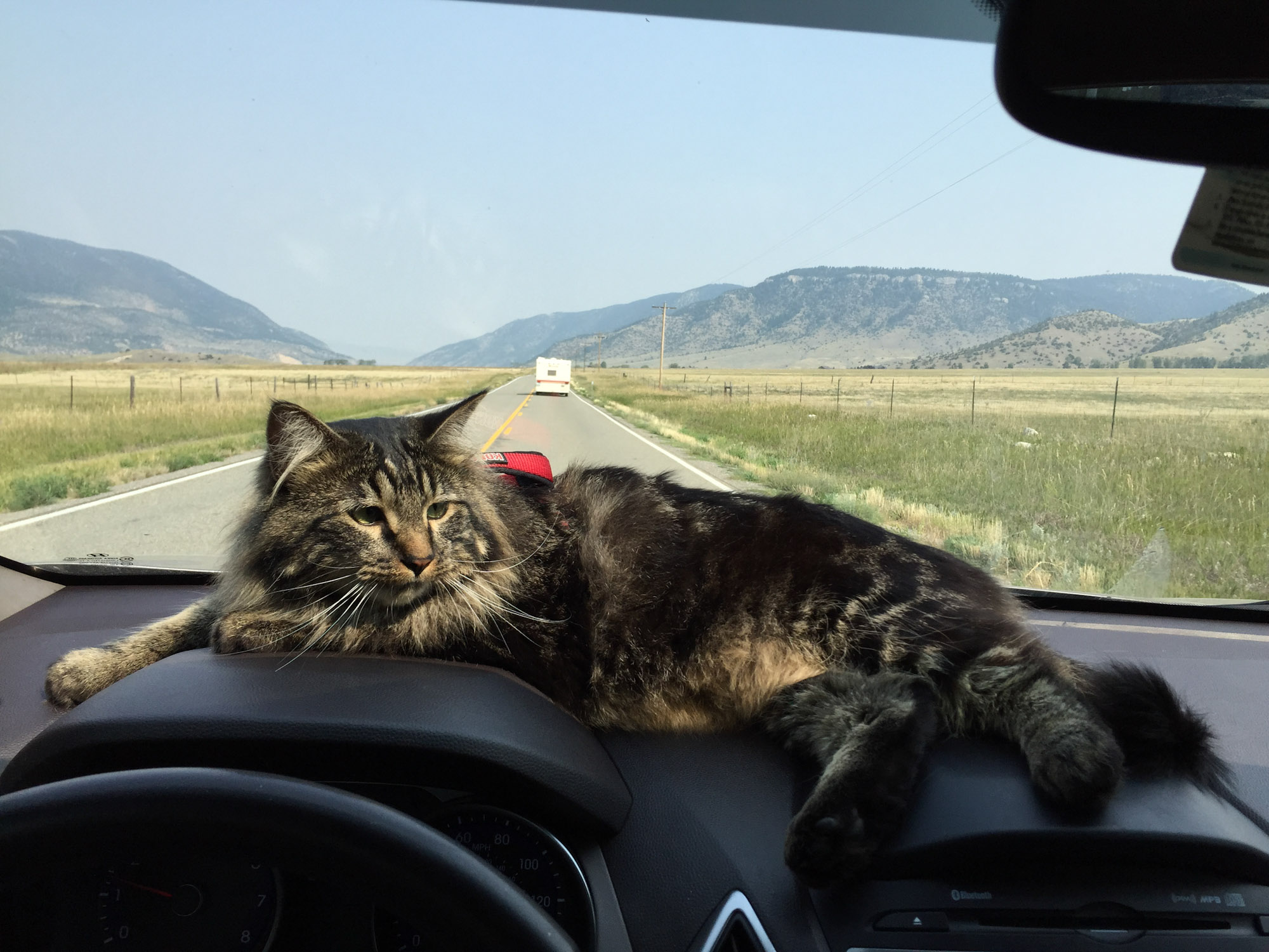adventure cat riding in car
