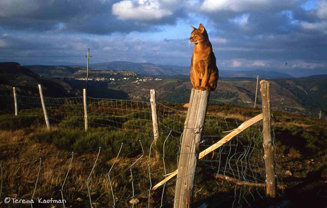 cat sitting on fence post in France