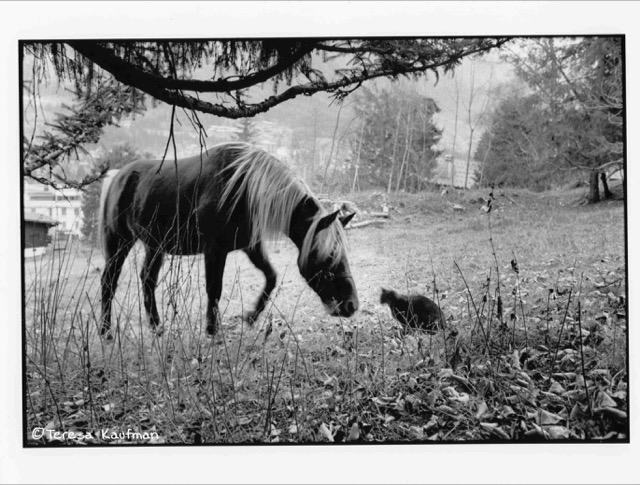 cat and horse together