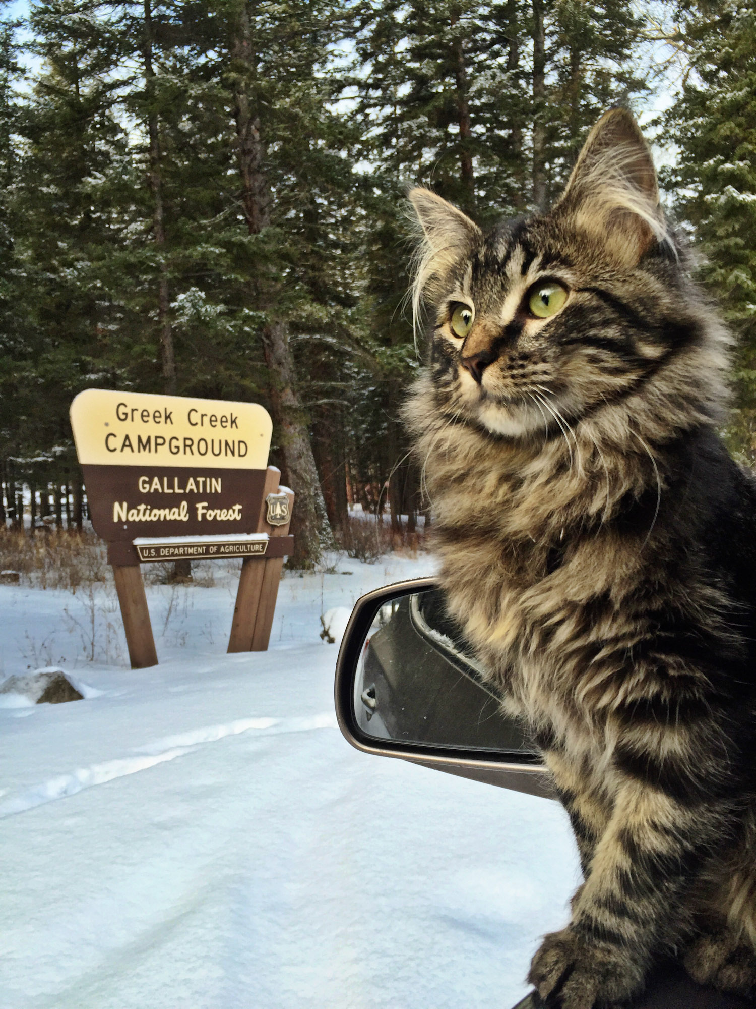 Otie adventure cat in national forest