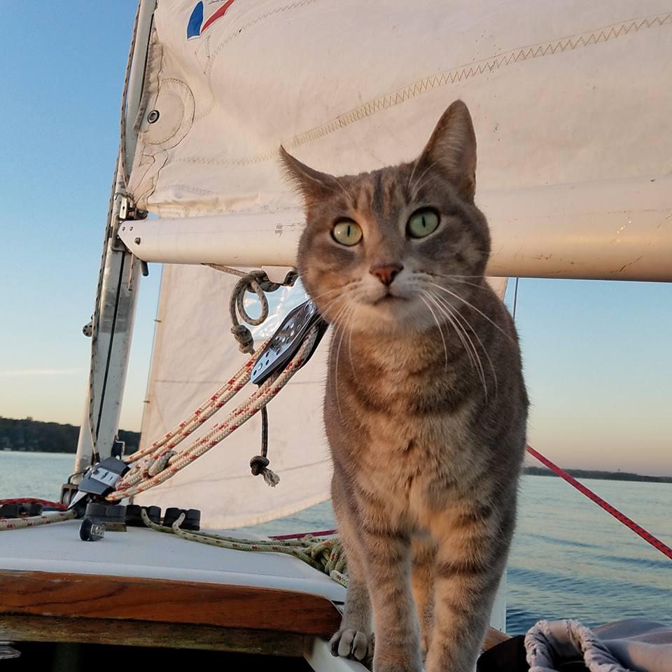 Bug goes sailing