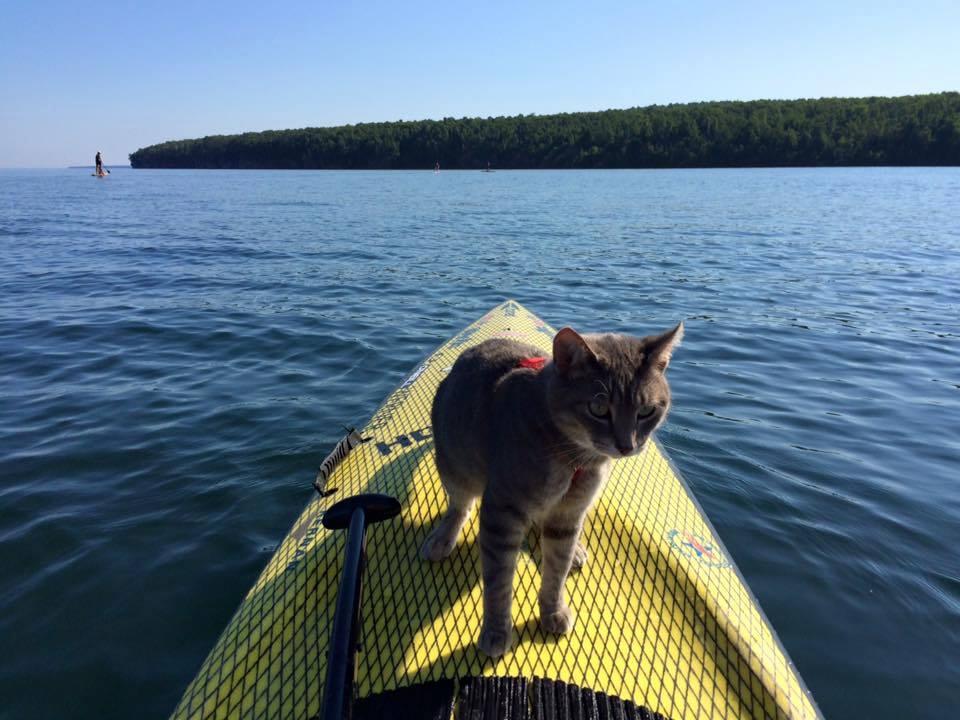 Cat on SUP
