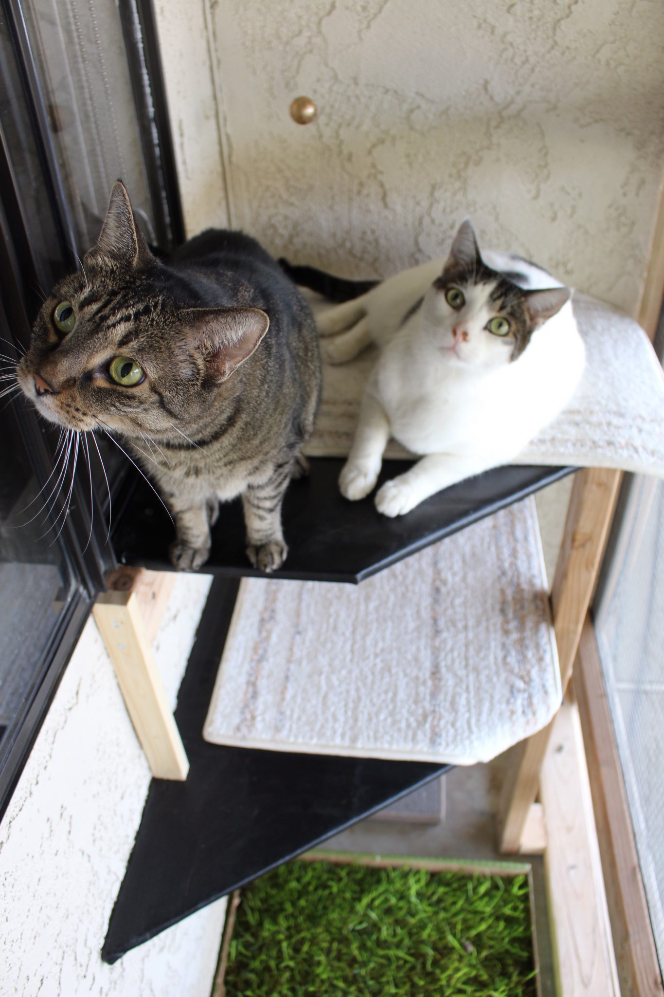 Georgie and Frankie love their catio shelves! (Photo: Alicia Haney)